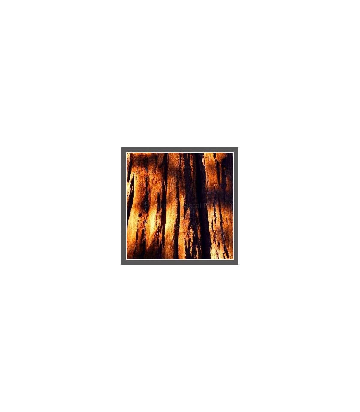 Photo sequoia
