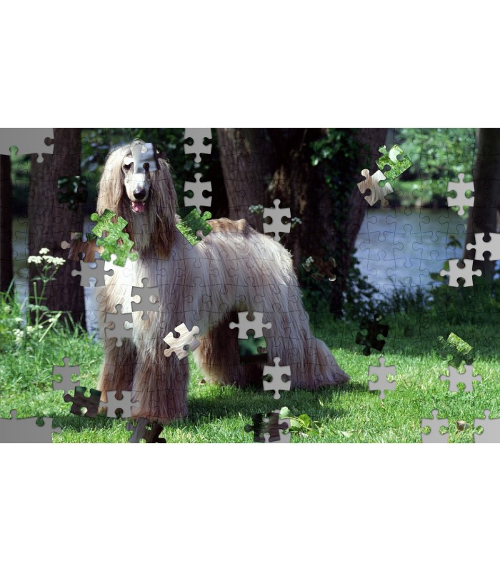 Puzzle photo chien afghan