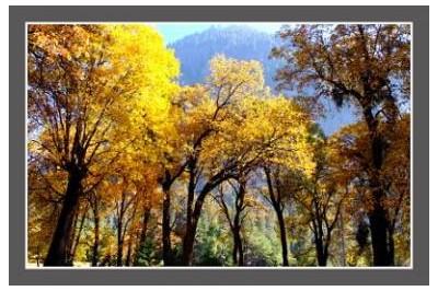 La foret du Yosemite au automne