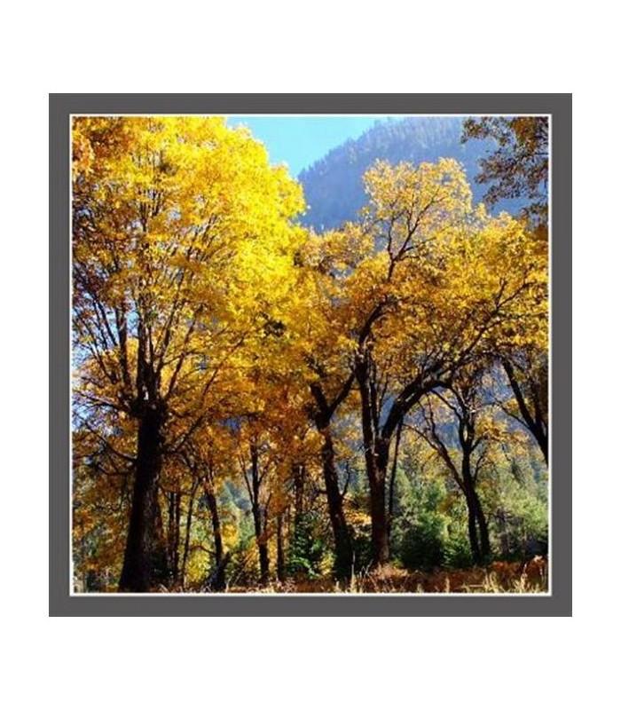 L automne dans le yosemite parc