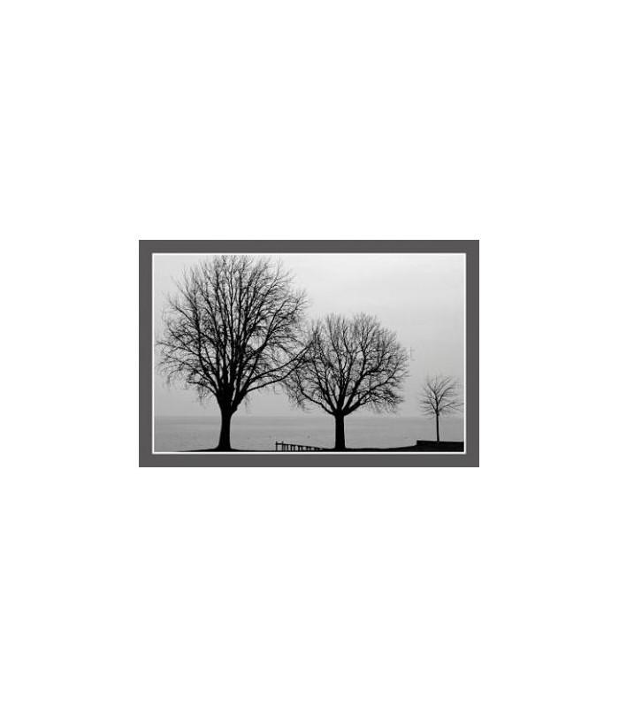 Photos arbre sur les bords du lac de geneve